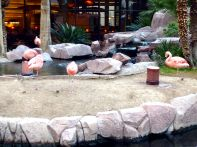 Flamingo Las Vegas has real flamingos!